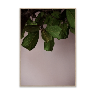 Bilde av Green Leaves plakat 50 x 70