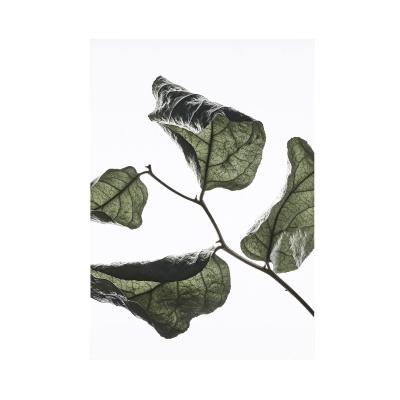 Bilde av Floating Leaves 03 plakat A3